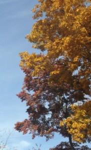 trees11