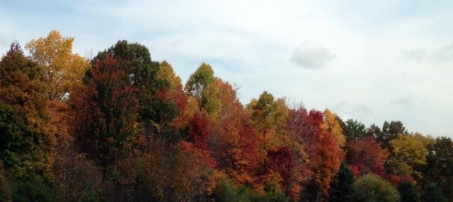 treeslandscape
