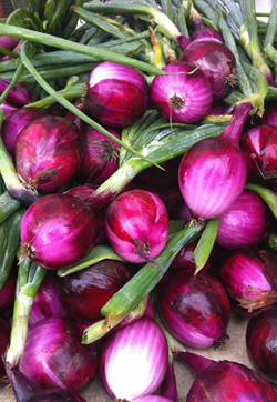 Onions-250